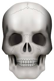 halloween clipart transparent background skull png clipart image gallery yopriceville high quality