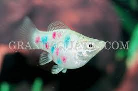 fish fish exporter