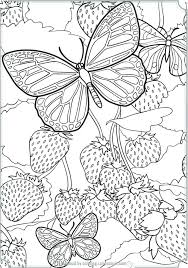 detailed butterfly coloring pages for adults detailed butterfly coloring pages detailed butterfly coloring pages