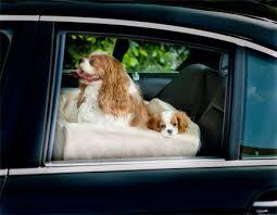 porta cani per auto companion car seat la sicurezza in auto dedicata ai cani