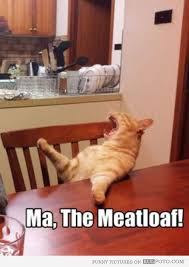 Cat Sitting Meme - funny cat memes best cute kitten meme and pictures