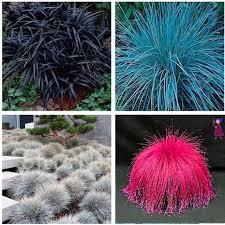 aliexpress buy 300pcs lot bonsai plant fescue grass seeds