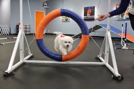 our high jumping therapy dog zoom room dog training