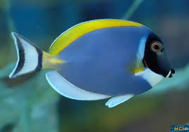 marine fish aquarium manufacturer in delhi india by live fish shop
