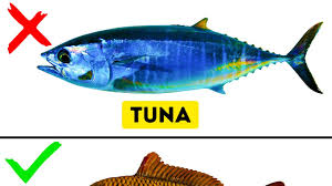 9 kinds of fish you should never eat youtube