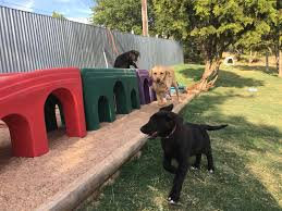 service dogs inc blog archive sdi play yard dedication service