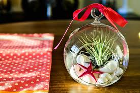 amazon com hinterland trading mother u0027s day gift air plant