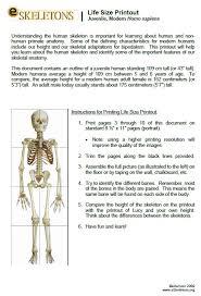 Anatomy Of The Human Body Bones Teaching Skeletal Anatomy To Kids Powered By Osteons