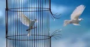 uccelli in gabbia l altra riva 盪 scarceranda