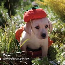 in costumes 56 puppies in costumes 25 best ideas about dogs in costumes on