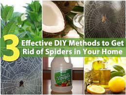 3 effective diy methods to get rid of spiders in your home diy
