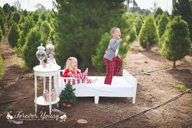 forever young photography by paige san diego christmas tree farm