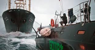 australian shepherd 60 minutes sea shepherd activists wage war on japanese whalers cbs news