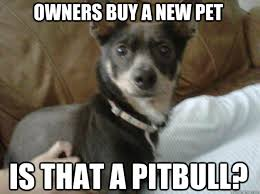 Pitbull Puppy Meme - owners buy a new pet is that a pitbull petrified dog quickmeme