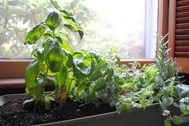 window herb gardens new window herb garden home decorations insight