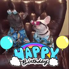 Happy Birthday Meme Gif - dog birthday gifs get the best gif on giphy