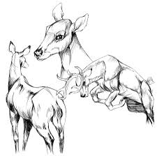 deer anatomical drawings by buttermutt on deviantart