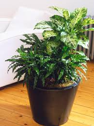 Japanese House Plants The Best Houseplants For Focal Points Hgtv