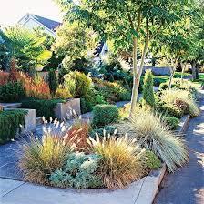 36 best ornamental grasses images on ornamental
