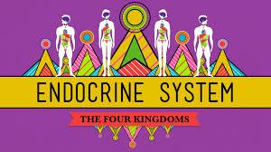 great glands your endocrine system crashcourse biology 33