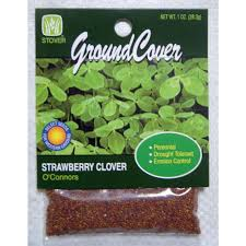 oconnors strawberry clover 79021 6 the home depot