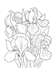 best free printable iris flowers coloring pages for kids