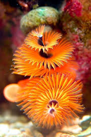 25 best medusa images on pinterest under the sea jelly fish and