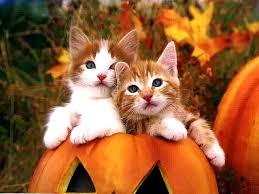 thanksgiving safety for cats arrow veterinary service llc