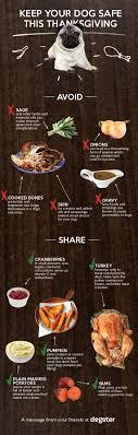 best 25 pet turkey ideas on thanksgiving activities