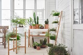 all about houseplants 2 plant types ikea home