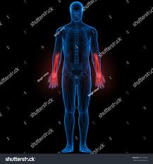 Joints Human Anatomy Human Body Bone Pains Finger Joints Stock Illustration 387218932