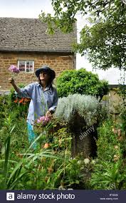 Cottage Garden Farm A Woman Picking Flowers In A Small Cottage Garden Oxfordshire Uk