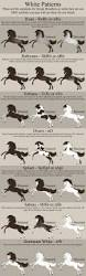 29 best horse breed chart images on pinterest horse breeds