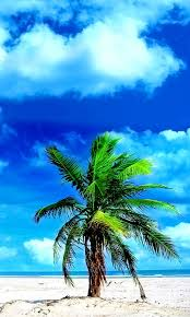 new wallpaper 71 hd samsung wallpapers for free download nature pinterest