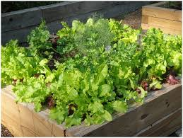 Backyard Vegetable Garden Design Ideas by Backyards Splendid 69 Vegetable Garden Design Ideas Nz Splendid