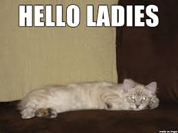 Cat Meme Ladies - my cat was quite the ladies man when he was a kitten meme guy