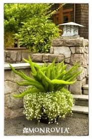 Texas Landscape Plants by South Texas Landscaping On Pinterest Texas Landscaping Drought