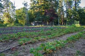 The Urban Garden Vancouver Creekside Farm In Campbell River B C