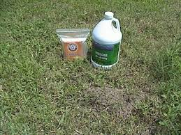 How To Kill Ants In The Kitchen by How To Kill Fire Ants And Commit Genocide 4 Steps