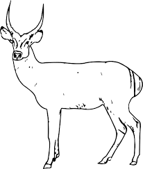 antelope spotted deer coloring page wecoloringpage