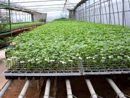 greenhouse nursery supplies professional commercial greenhouses