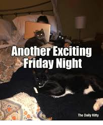 Friday Night Meme - another exciting friday night the daily kitty friday meme on