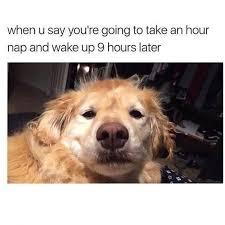 Much Dog Meme - new 14 best funniest dog memes images on pinterest wallpaper
