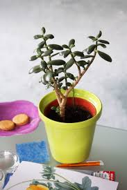 stands ikea artificial modern tall indoor plants u flowers plant