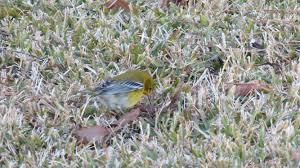 backyard birds of east texas pamperingcampers blog