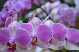 Orchids Facts by Colombia Is The Second Cut Flower Exporters In The World Zaia