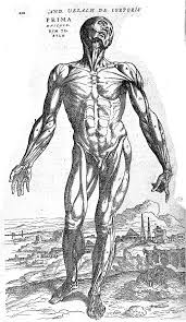 Male Internal Organs Anatomy File Male Torso Revealing Internal Organs And System Wellcome
