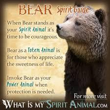 bear symbolism u0026 meaning spirit totem u0026 power animal