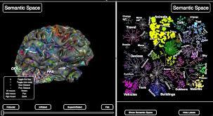 Semantic Map Uc Berkeley Team Builds U0027semantic Atlas U0027 Of The Human Brain