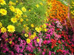 garden flowers names u2013 home design and decorating